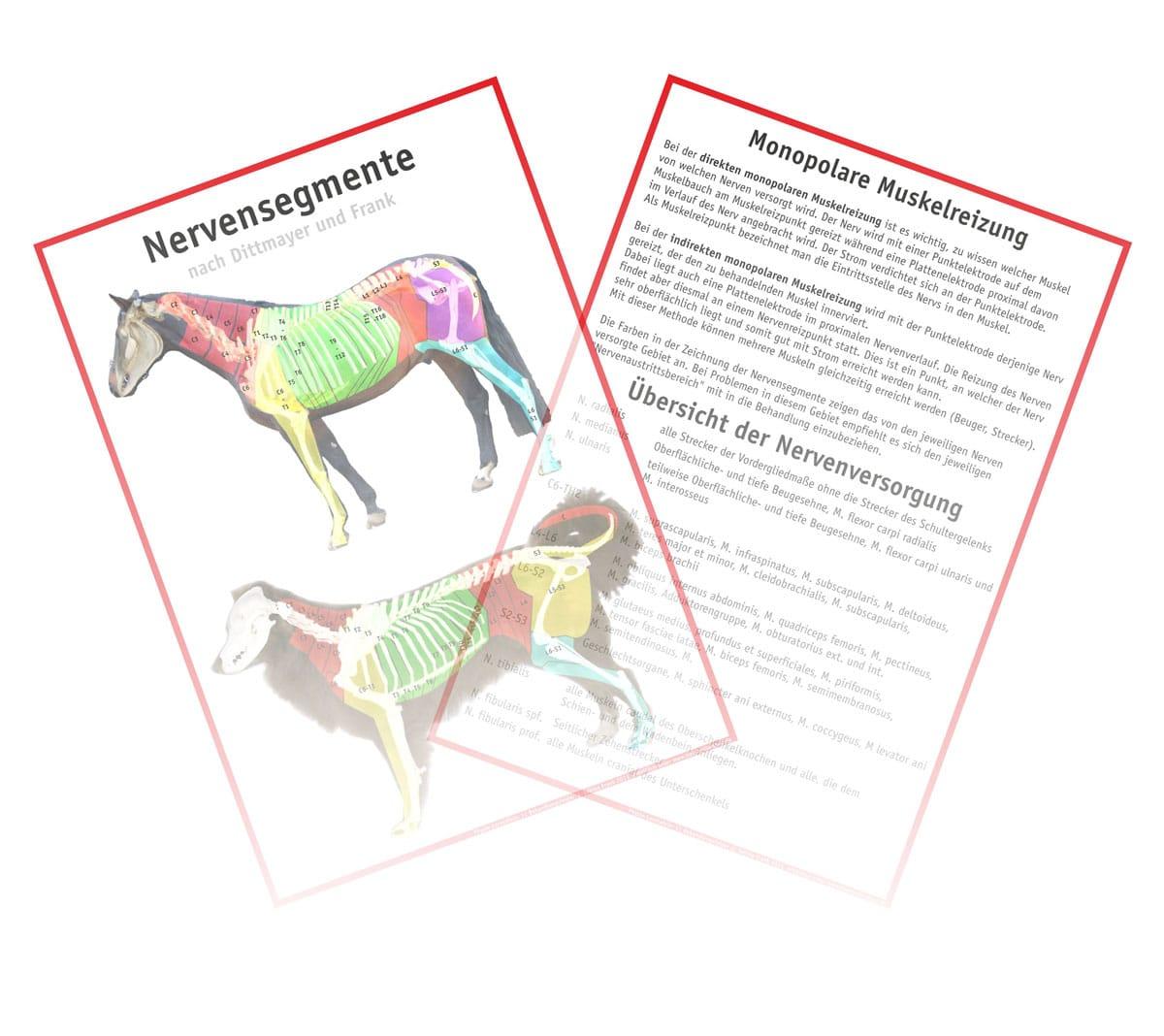 Behandlungsfelder / Nervensegmente HUND & PFERD