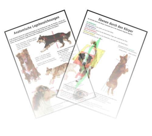 Anatomische Lagebezeichnungen Hund