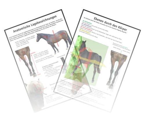 Anatomische Lagebezeichnungen Pferd