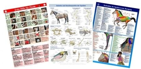 Poster-Set Pferd